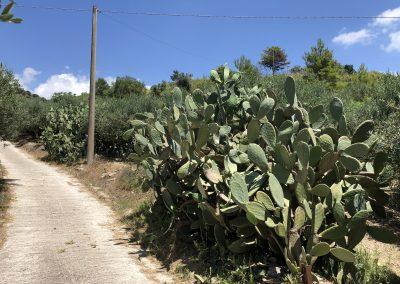 Przydrożne kaktusy