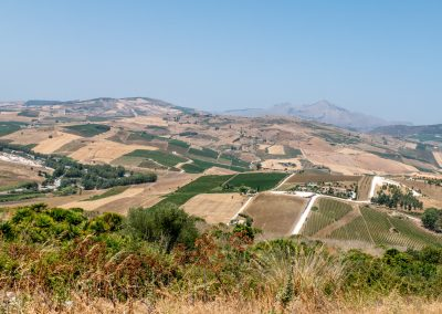 Ogromne pola sycylijskie