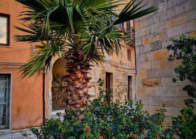 Palma w kwietniku