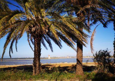 Palmy nad wodą