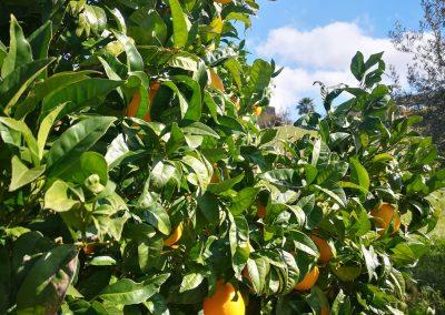 Owoce na terenie ośrodka