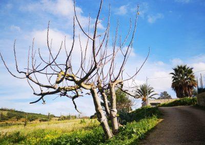 Przydrożne drzewa