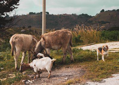 Zwierzęta razem