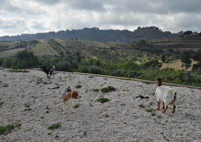 Kozy wraz z psem