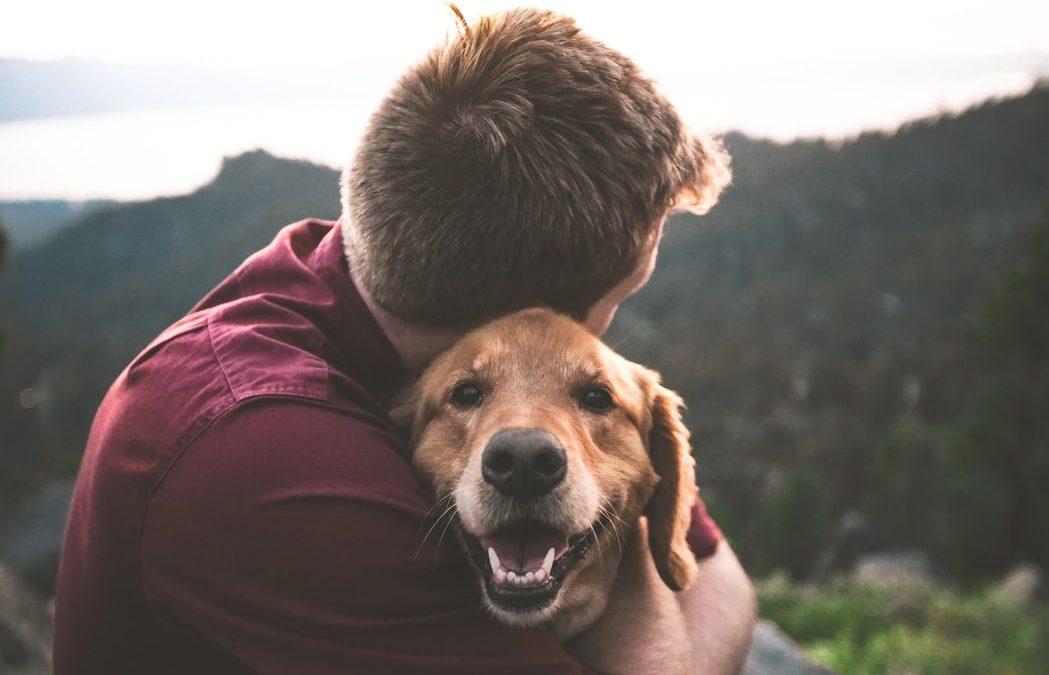 Poznaj dobroczynny wpływ zwierząt na człowieka!